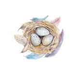 Entregue o ninho tirado com ovos, projeto do pássaro da arte da aquarela de easter Imagem de Stock Royalty Free