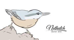 Entregue o pica-pau-cinzento isolado tirado da cor no fundo branco Linha projeto esboço ilustração do vetor