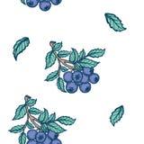 Entregue o ramo colorido tirado da ilustração do verão do fundo do vetor dos mirtilos com folhas verdes ilustração stock