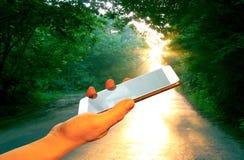 Entregue o smartphone na floresta do verde da estrada de floresta do sol do voshodyaschego do fundo Imagens de Stock