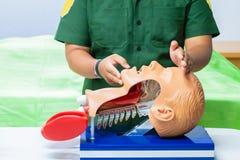 Entregue o treinamento com o manequim médico principal no CPR, no refresher da emergência à assistência do médico foto de stock