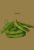Entregue o vegetal tirado - feijões do edamame/soja ilustração do vetor