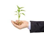 Entregue prender uma planta que cresce da pilha das moedas Imagem de Stock Royalty Free