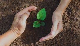 Entregue a proteção de uma planta nova verde com crescimento no solo sobre fotografia de stock