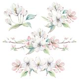 Entregue ramos de árvore da maçã e flores tirados, árvore de florescência Imagens de Stock