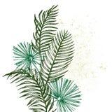 Entregue ramos e as folhas tirados da palma das plantas tropicais Ilustração floral do objeto exótico isolada no fundo branco Foto de Stock Royalty Free