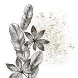 Entregue ramos e as folhas tirados de plantas tropicais banana e areca Ilustração floral do objeto exótico isolada no branco Imagem de Stock