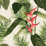 Entregue ramos e as folhas tirados de plantas tropicais Fundo verde natural com espaço para o texto Fotografia de Stock