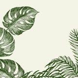 Entregue ramos e as folhas tirados de plantas tropicais Monstera e folhas de palmeira verdes em torno do lugar para o texto eleva Fotos de Stock Royalty Free