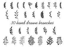 Entregue ramos tirados com as folhas isoladas no fundo branco Elementos florais decorativos para seu projeto Vetor do vintage ilustração royalty free