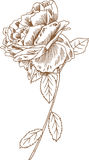 Entregue Rosa desenhada ilustração do vetor