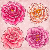 Entregue rosas desenhadas do jardim do estilo Imagem de Stock