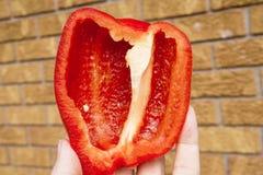 Entregue a sustentação da metade de pimenta de sino vermelha doce crua fresca, defocuse foto de stock royalty free