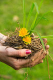 Entregue a sustentação da pilha do solo com flores amarelas foto de stock royalty free