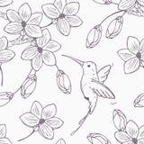 Entregue a versão monocromática tirada do teste padrão sem emenda com o colibri e as flores do pássaro do zumbido Fotos de Stock
