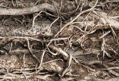Entrelaçamento complexo, ramos de árvore murchos, foto de stock royalty free