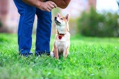 Entrenamiento con el perro Foto de archivo libre de regalías