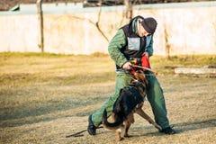 Entrenamiento de Dog del pastor alemán Fotos de archivo