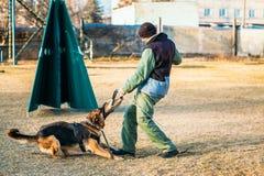 Entrenamiento de Dog del pastor alemán Fotografía de archivo libre de regalías