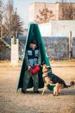 Entrenamiento de Dog del pastor alemán Foto de archivo