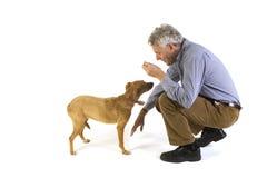 Entrenamiento de la obediencia del perro Fotos de archivo