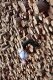 Entrenamiento de la suspensión en la pila grande de registros de madera del corte Imagen de archivo libre de regalías