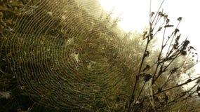 Entrenamiento de las arañas imagen de archivo