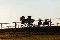 Entrenamiento de los caballos de raza Foto de archivo
