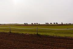 Entrenamiento de los caballos de raza Imagen de archivo