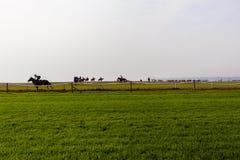 Entrenamiento de los caballos de raza Imagen de archivo libre de regalías