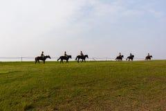 Entrenamiento de los caballos de raza Fotografía de archivo libre de regalías