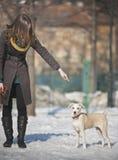 Entrenamiento de un perro Imágenes de archivo libres de regalías