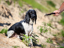 Entrenamiento de un perro de caza en el agua Imagen de archivo