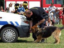 Entrenamiento de un perro de policía Imagen de archivo