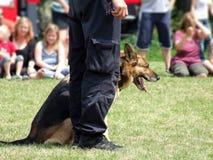 Entrenamiento de un perro de policía Foto de archivo