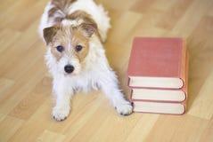 Entrenamiento del animal doméstico, de nuevo al concepto de la escuela - perro obediente lindo que pone con los libros foto de archivo libre de regalías