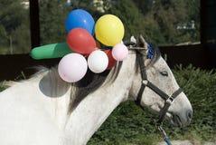 Entrenamiento del caballo Fotos de archivo libres de regalías