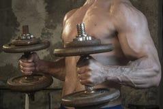 Entrenamiento del cuerpo de Fittnes muscular Imágenes de archivo libres de regalías