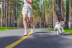 Entrenamiento del deporte con el perro Fotografía de archivo libre de regalías