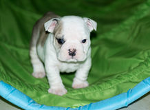 Entrenamiento del perrito fotos de archivo libres de regalías