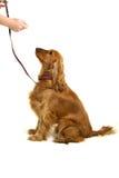 Entrenamiento del perro Imágenes de archivo libres de regalías