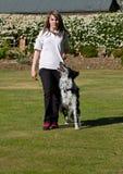 Entrenamiento del perro Foto de archivo