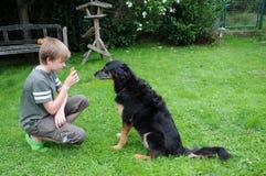 Entrenamiento del perro Fotografía de archivo