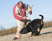 Entrenamiento del perro policía Imagenes de archivo