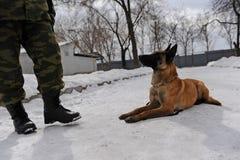 Entrenamiento del perro policía Imagen de archivo libre de regalías