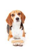 Entrenamiento obediente del perro Foto de archivo