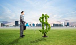 Entreprenör som bevattnar den gröna växten av dollaren arkivbild