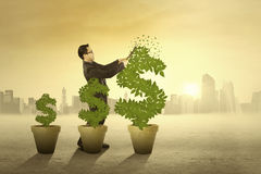 Entrepreneur manage the money tree Royalty Free Stock Photo