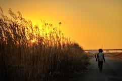 Entrer dans le coucher du soleil de Tokyo Image libre de droits
