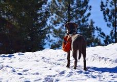 Entrer en avant dans la neige Photographie stock libre de droits